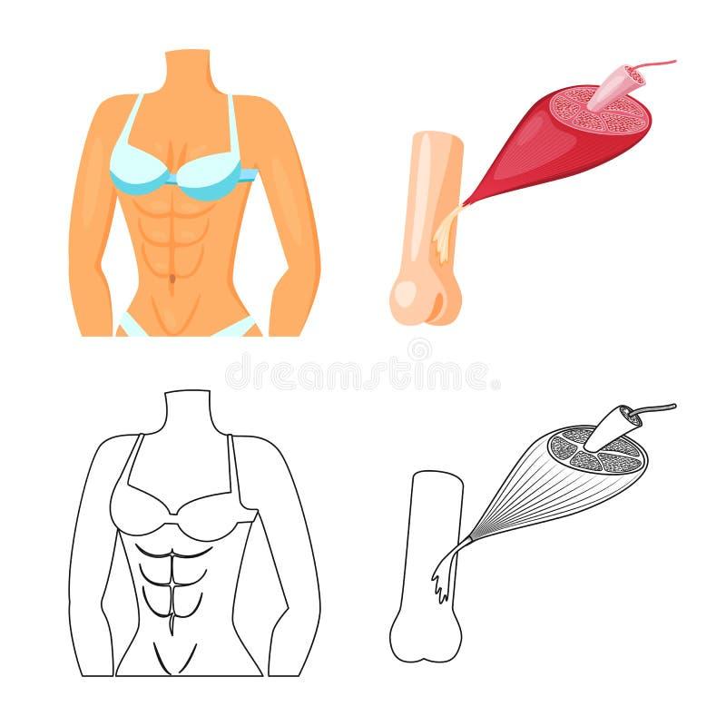 Illustrazione di vettore di fibra e del segno muscolare Metta dell'icona di vettore del corpo e della fibra per le azione illustrazione vettoriale