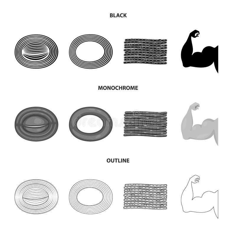 Illustrazione di vettore di fibra e del segno muscolare Raccolta dell'illustrazione di vettore delle azione del corpo e della fib royalty illustrazione gratis