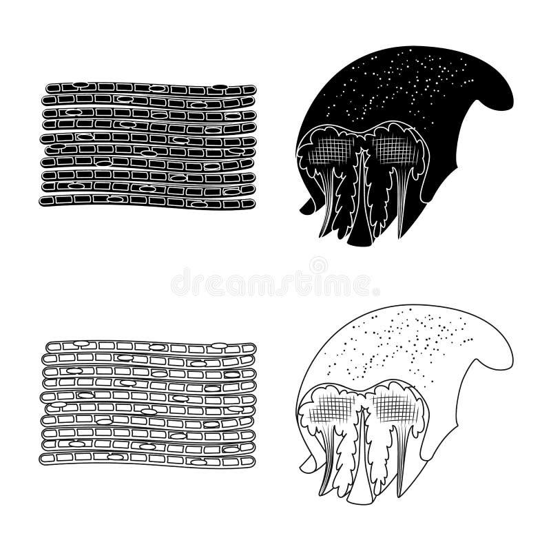 Illustrazione di vettore di fibra e del segno muscolare Raccolta dell'illustrazione di vettore delle azione del corpo e della fib illustrazione di stock