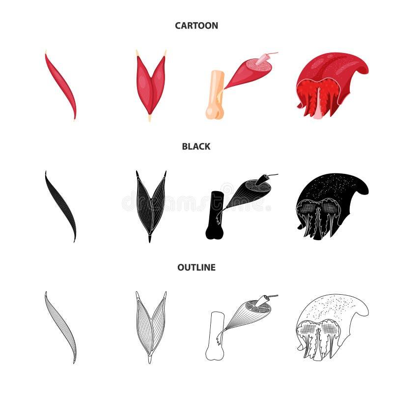Illustrazione di vettore di fibra e del segno muscolare Raccolta dell'icona di vettore del corpo e della fibra per le azione royalty illustrazione gratis