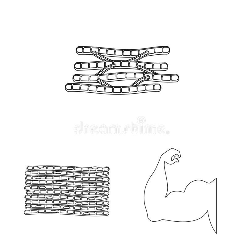 Illustrazione di vettore di fibra e del segno muscolare Raccolta del simbolo di riserva del corpo e della fibra per il web royalty illustrazione gratis