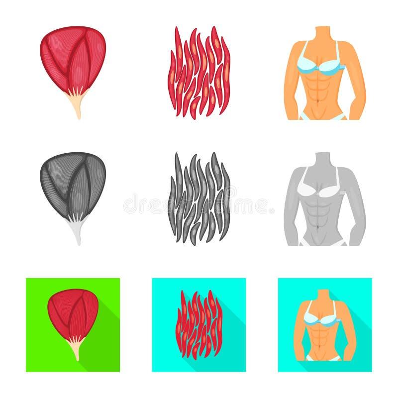 Illustrazione di vettore di fibra e dell'icona muscolare Raccolta dell'icona di vettore del corpo e della fibra per le azione illustrazione vettoriale