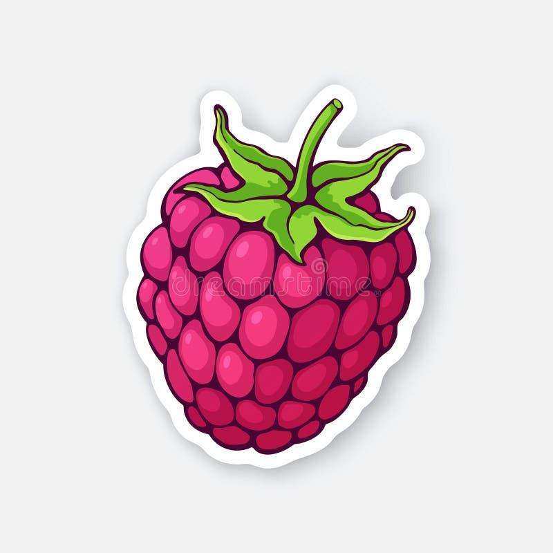 Illustrazione di vettore Frutta del lampone con il gambo Dieta sana ed alimento del vegetariano Autoadesivo con il contorno illustrazione vettoriale