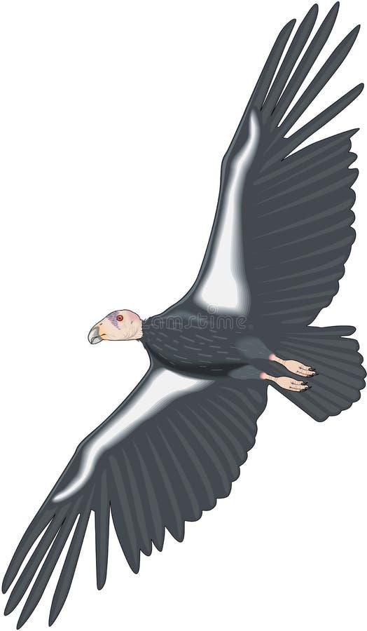 Illustrazione di volo del condor della California illustrazione di stock