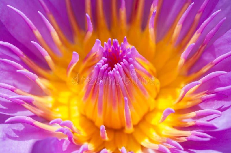 Download Illustrazione Di Zen Del Fiore Di Loto Fotografia Stock - Immagine di riflessioni, lilly: 55360044