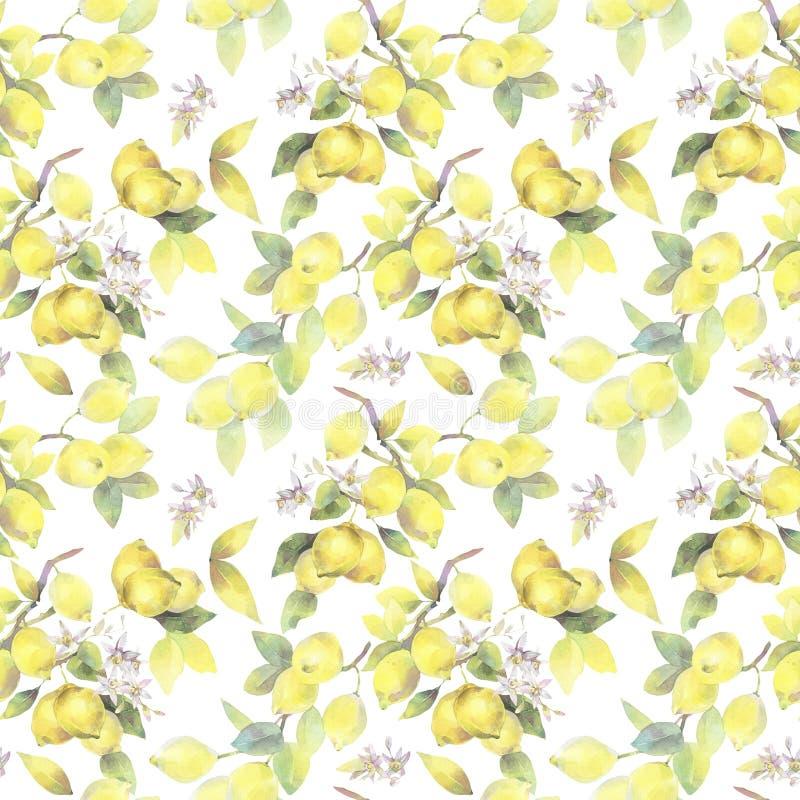 Illustrazione dipinta a mano dell'acquerello modello senza cuciture con gli elementi del ramo di limone royalty illustrazione gratis