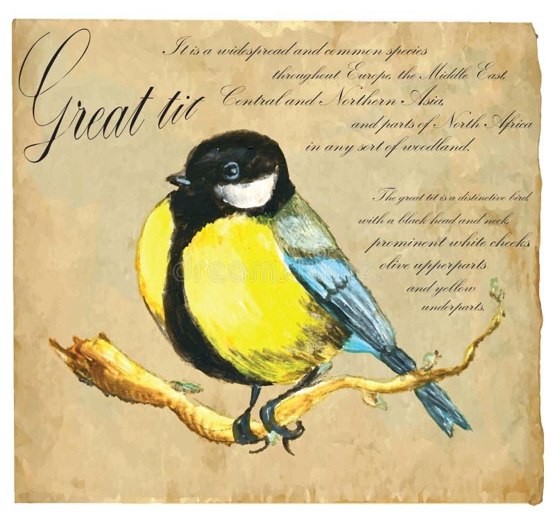 Illustrazione dipinta a mano (vettore), uccello: Capezzolo illustrazione vettoriale