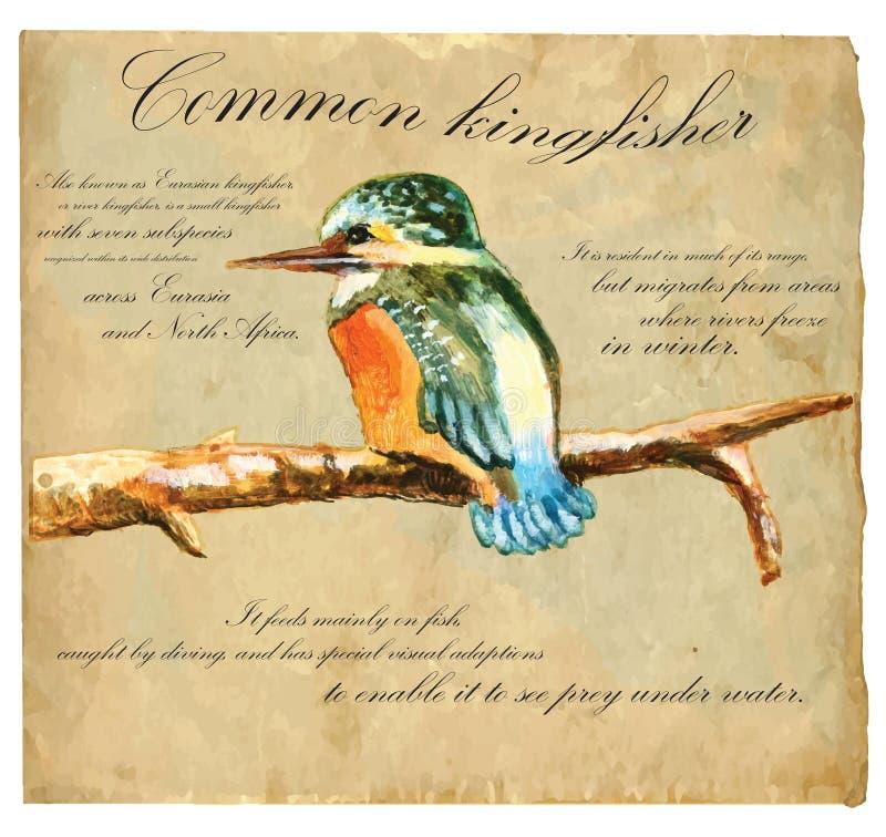 Illustrazione dipinta a mano (vettore), uccello: Martin pescatore royalty illustrazione gratis