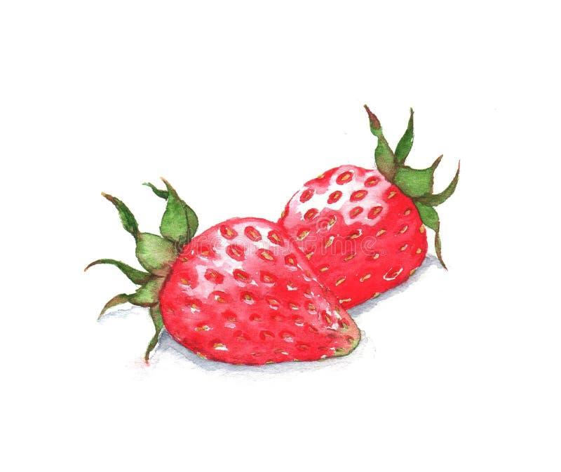 Illustrazione disegnata a mano dell'acquerello dell'alimento immagini stock