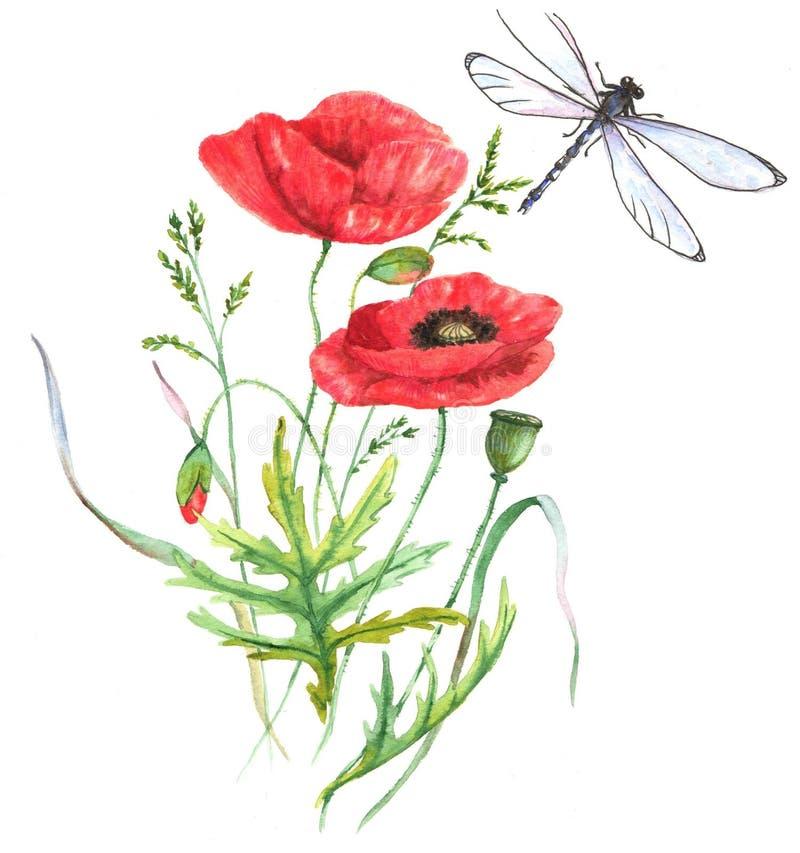 Illustrazione disegnata a mano dell'acquerello del fiore rosso del papavero di estate e della libellula illustrazione di stock