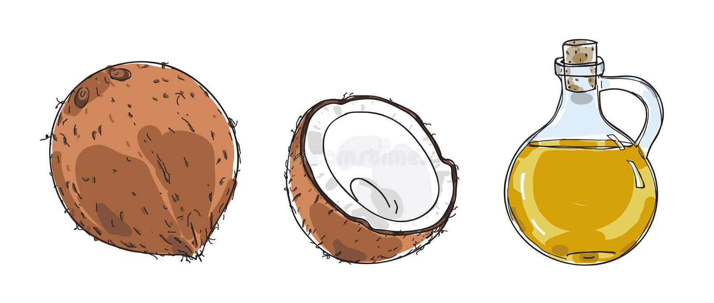 Illustrazione disegnata a mano di arte di vettore dell'olio di cocco e della noce di cocco illustrazione vettoriale