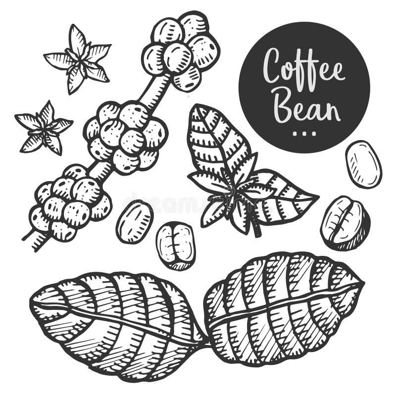 Illustrazione disegnata a mano di caffè illustrazione vettoriale