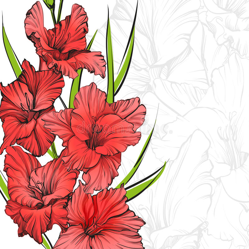 Illustrazione disegnata a mano di fioritura floreale di vettore di gladiolo illustrazione di stock