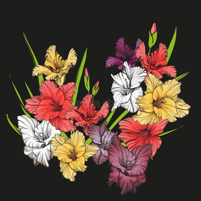 Illustrazione disegnata a mano di fioritura floreale di vettore di gladiolo royalty illustrazione gratis