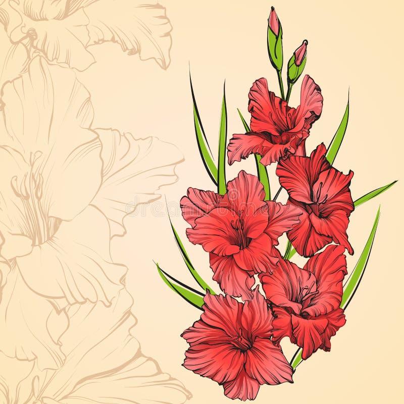 Illustrazione disegnata a mano di fioritura floreale di vettore di gladiolo illustrazione vettoriale