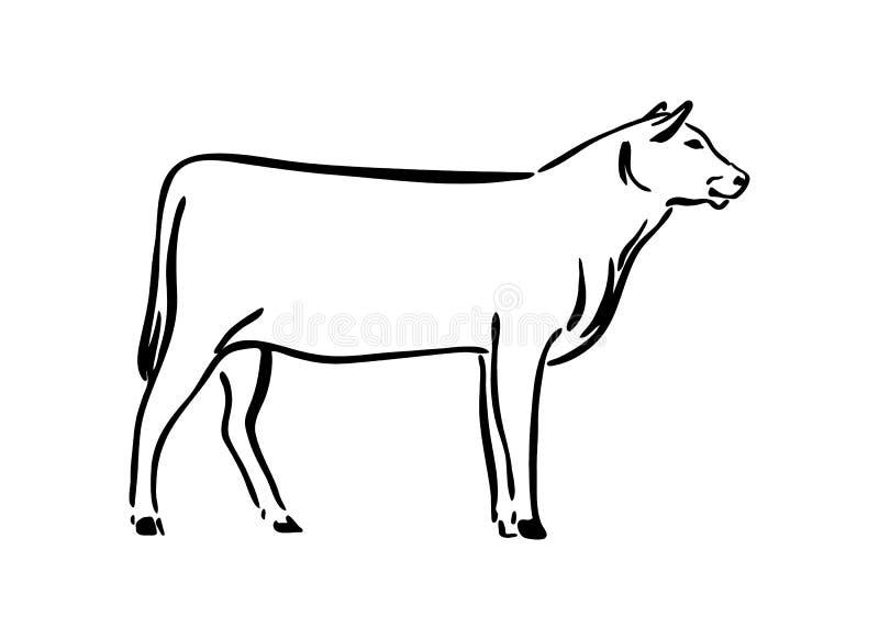 Illustrazione disegnata a mano di schizzo della mucca Animale da allevamento del disegno dell'inchiostro del nero di vettore, sil illustrazione vettoriale