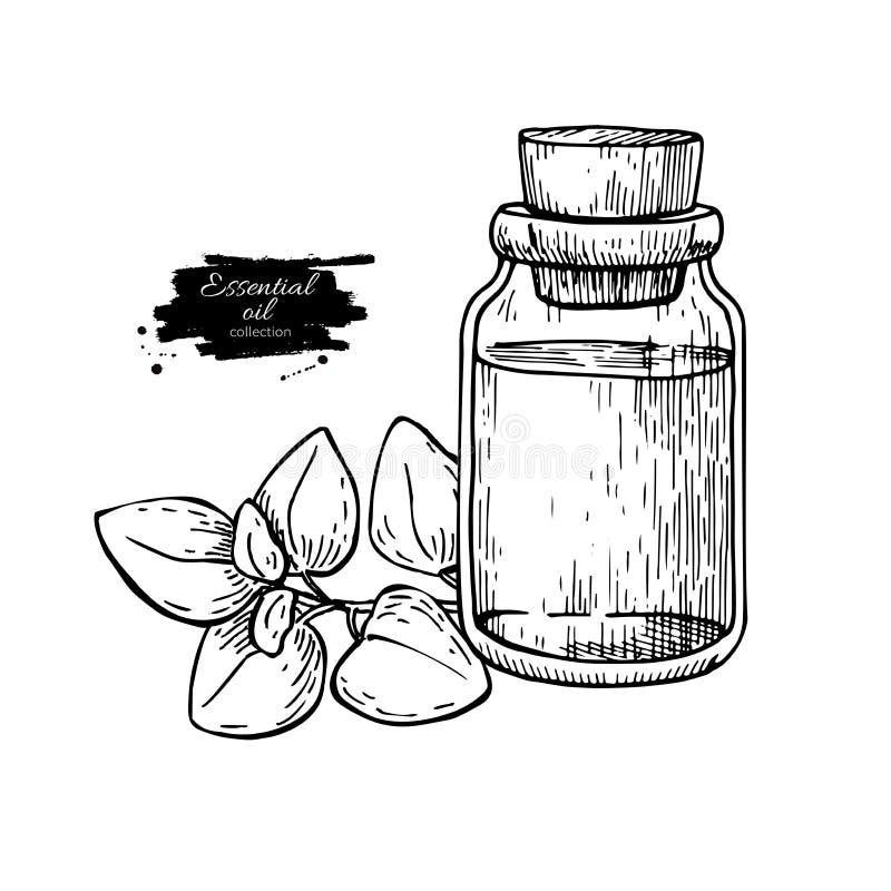 Illustrazione disegnata a mano di vettore delle foglie della bottiglia e dell'origano di olio essenziale dell'origano Disegno iso royalty illustrazione gratis