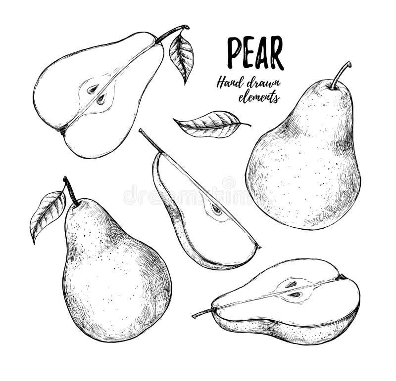 Illustrazione disegnata a mano di vettore - insieme delle fette pera, pere e l illustrazione vettoriale