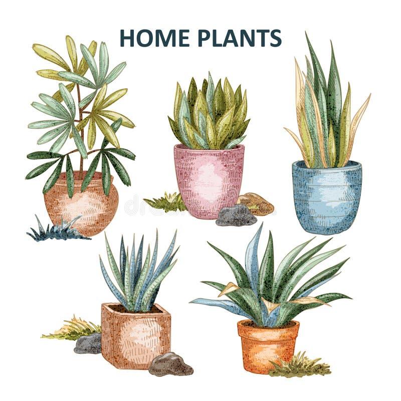 Illustrazione domestica 01 della pianta royalty illustrazione gratis