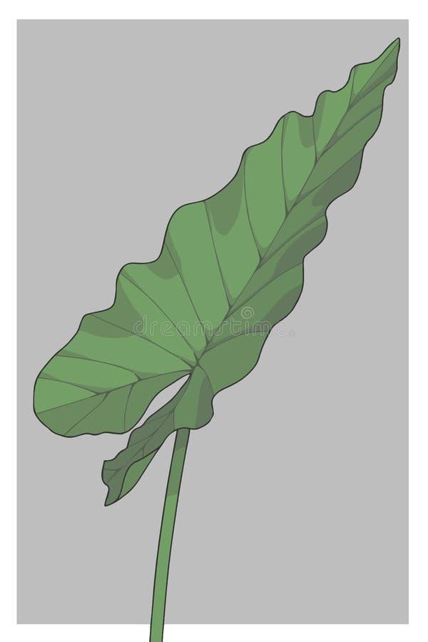 Illustrazione enorme di vettore della pianta tropicale della foresta pluviale dell'orecchio di elefante del taro gigante di Macro illustrazione vettoriale