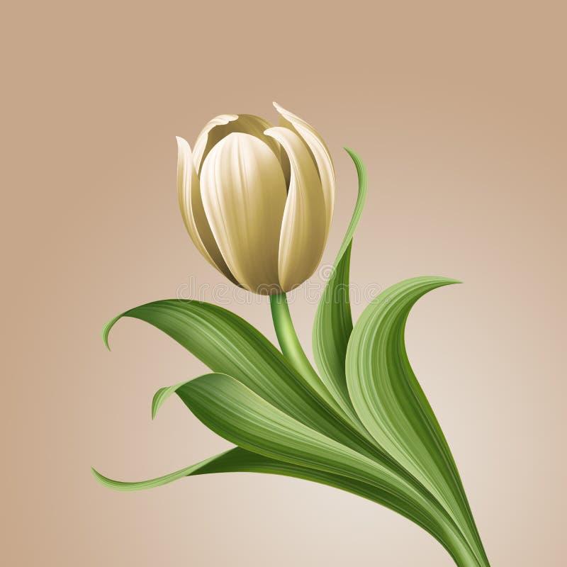 Illustrazione floreale d'annata del tulipano bianco, elemento isolato di progettazione del fiore royalty illustrazione gratis
