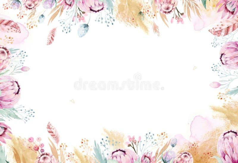 Illustrazione floreale dell'acquerello isolata disegno della mano con la rosa, le foglie, i rami ed i fiori del protea Oro della  royalty illustrazione gratis