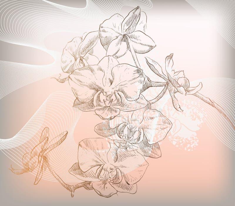 Illustrazione floreale di vettore dei fiori variopinti illustrazione vettoriale