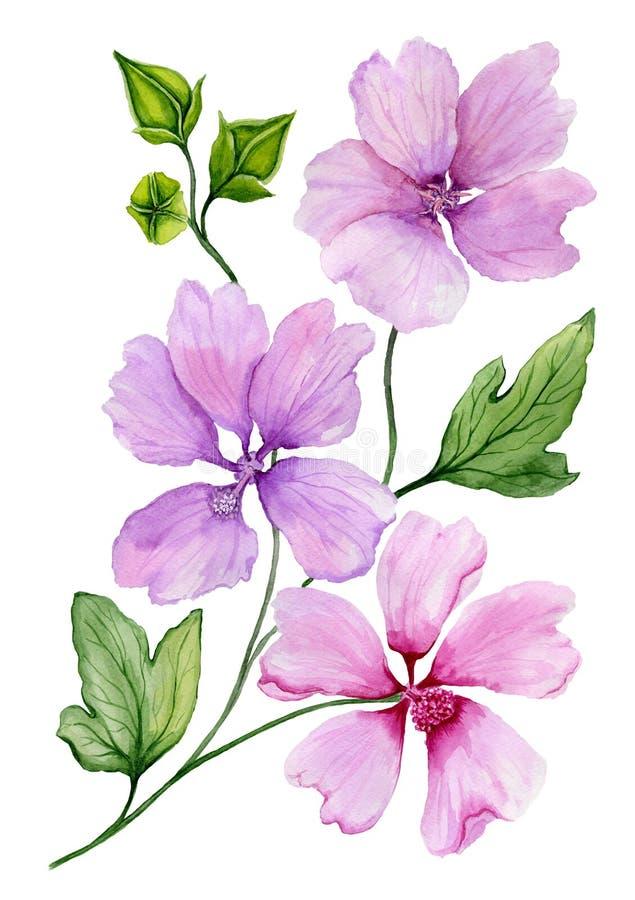 Illustrazione floreale molle Il bello lavatera rosa e porpora fiorisce su un ramoscello con le foglie verdi isolate su fondo bian illustrazione vettoriale
