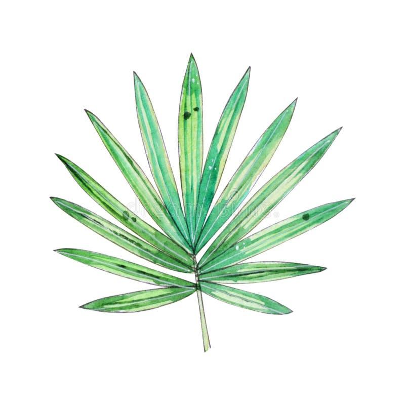 Illustrazione floreale tropicale dell'acquerello con la foglia verde illustrazione di stock