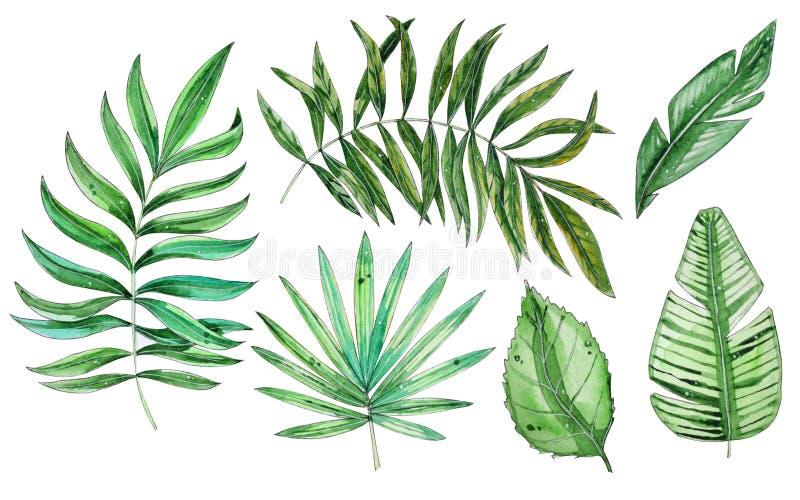 Illustrazione floreale tropicale dell'acquerello messa con le foglie verdi illustrazione di stock