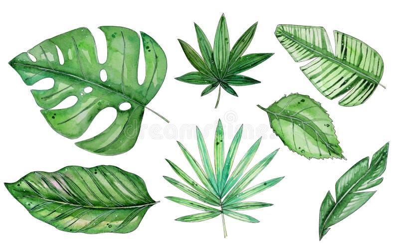 Illustrazione floreale tropicale dell'acquerello messa con le foglie verdi illustrazione vettoriale