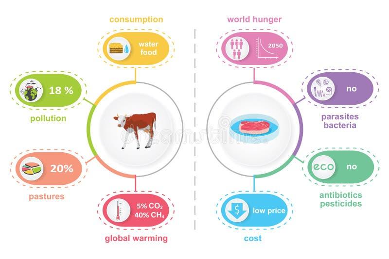 Illustrazione infographic laboratorio-crescente coltivata della carne illustrazione vettoriale
