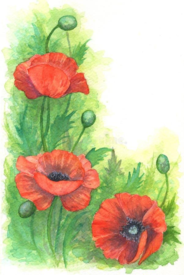 Illustrazione isolata dell'acquerello dei papaveri rossi su fondo bianco royalty illustrazione gratis