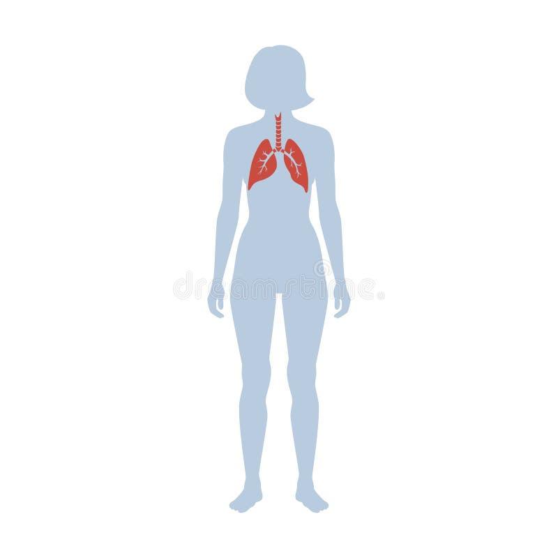 Illustrazione isolata vettore del polmone illustrazione di stock