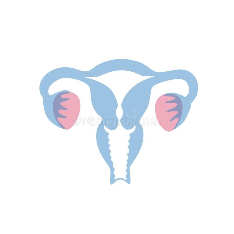 Illustrazione isolata vettore dell'utero illustrazione di stock