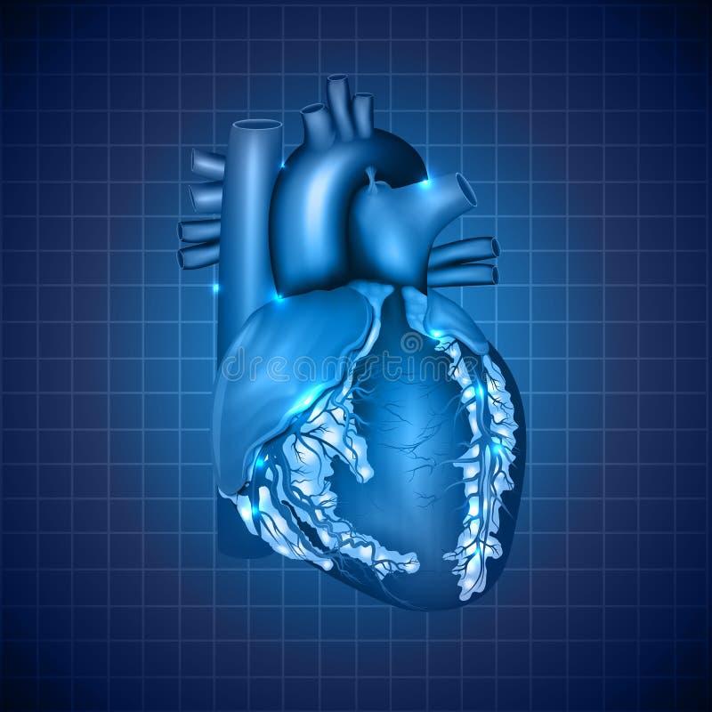 Illustrazione medica del cuore umano, blu astratto de illustrazione di stock