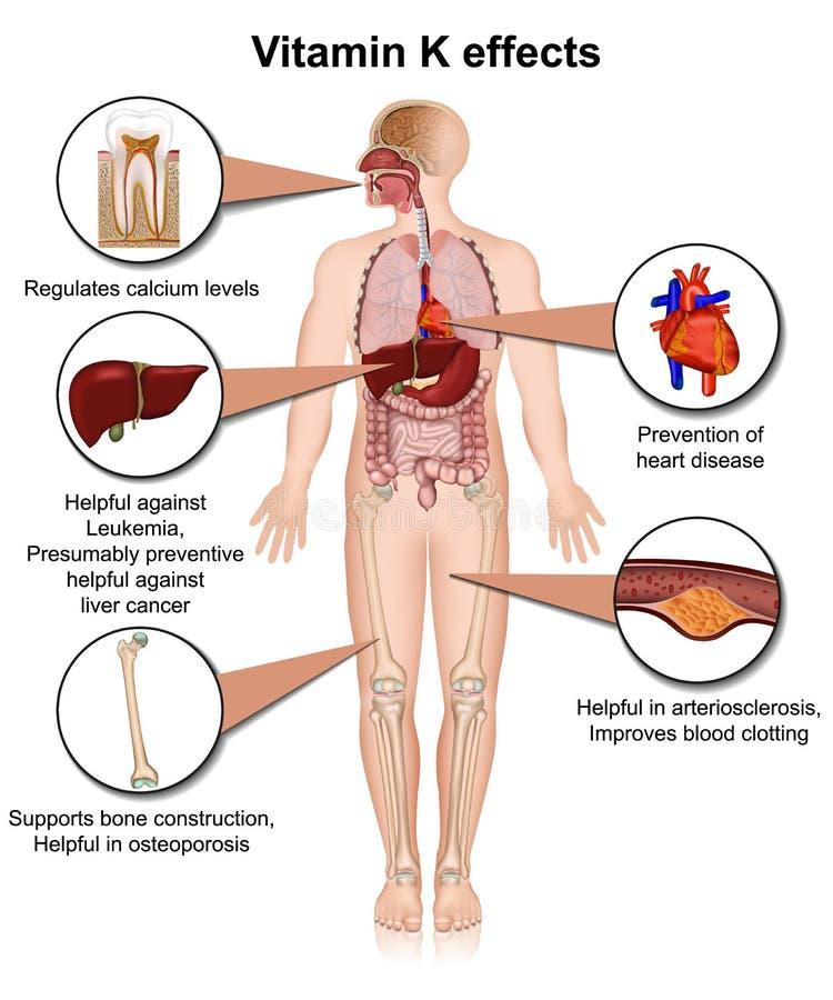 Illustrazione medica infographic 3d di effetti di vitamina K su fondo bianco illustrazione vettoriale