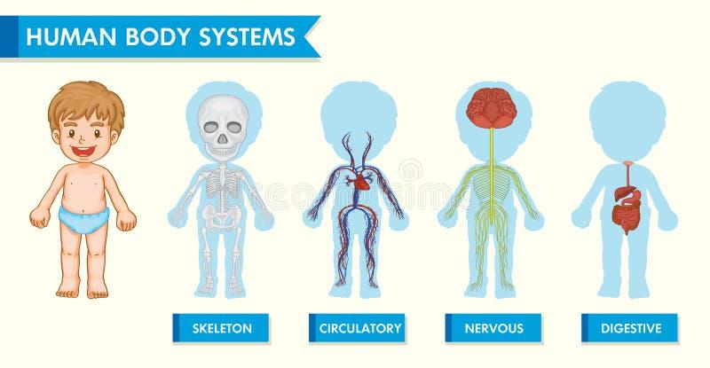 Illustrazione medica scientifica dei sistemi del corpo umano in bambini royalty illustrazione gratis