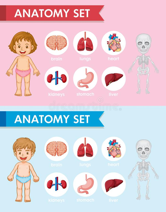 Illustrazione medica scientifica delle parti antomy umane royalty illustrazione gratis