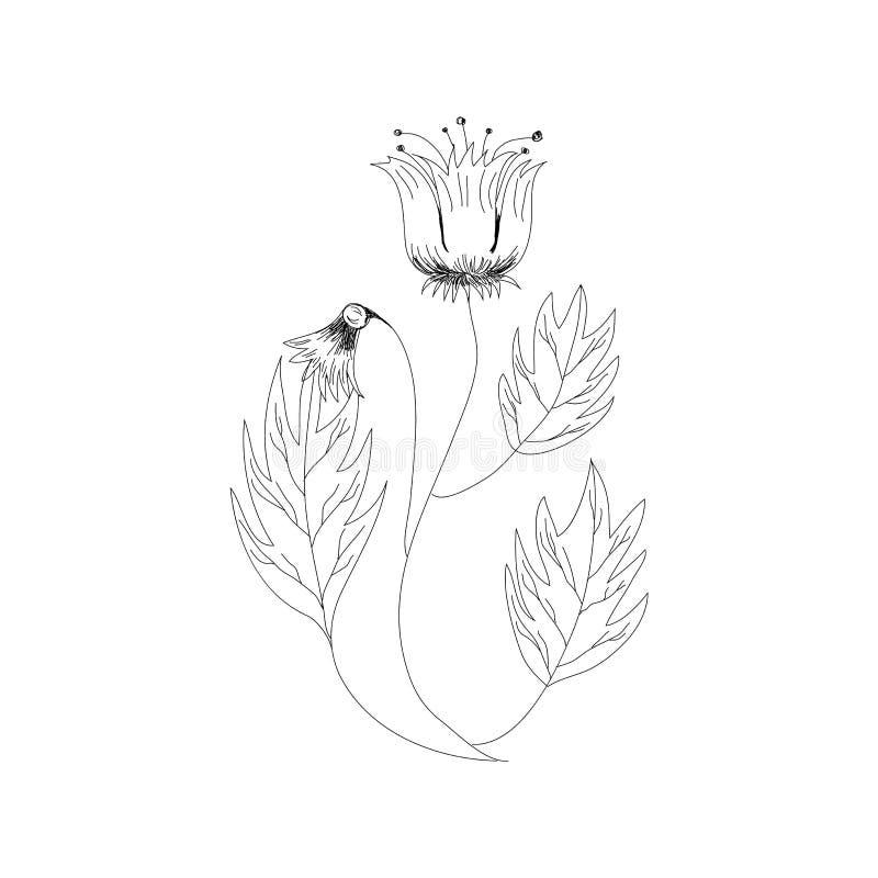 Illustrazione monocromatica di vettore del fiore Bella tigre lilly isolata su fondo bianco Elemento per progettazione delle carto illustrazione di stock