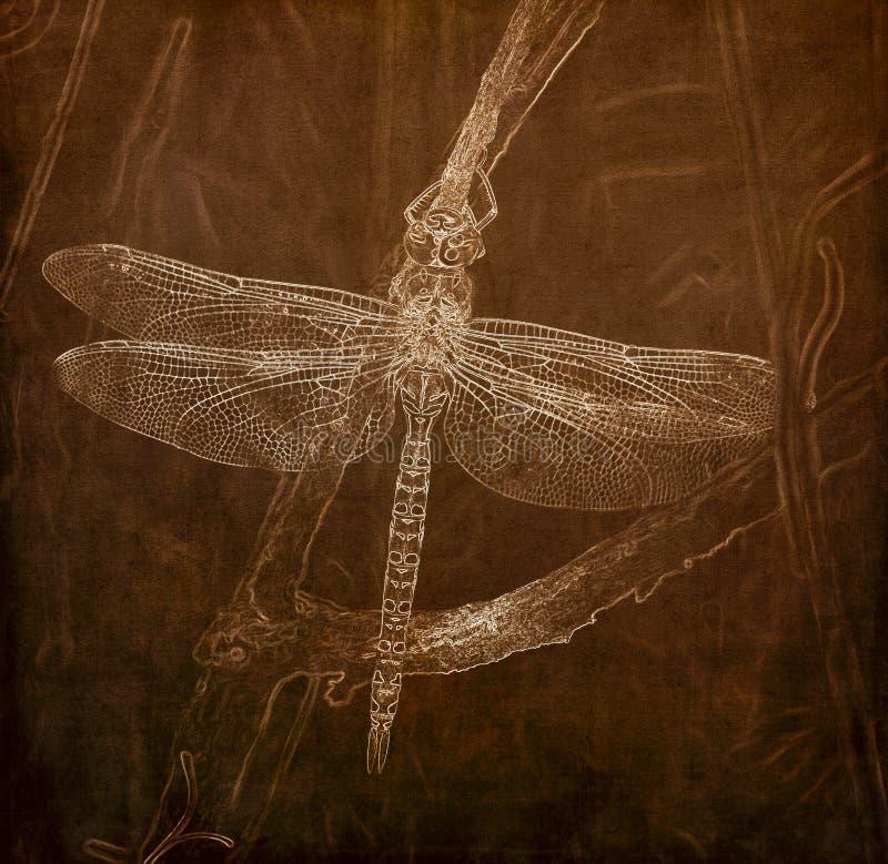 Illustrazione nella seppia di un palmata più darner Pagaia-munito di Aeshna della libellula che pende da un arto di albero nella  immagini stock libere da diritti