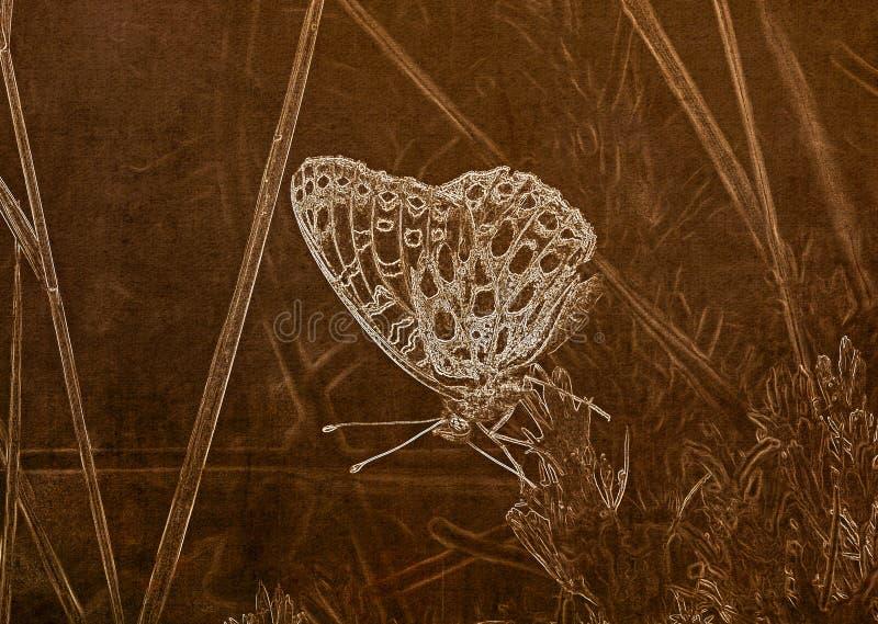 Illustrazione nella seppia di una macro di un Afrodite di Aphrodite Fritillary Speyeria che raccoglie polline immagini stock libere da diritti