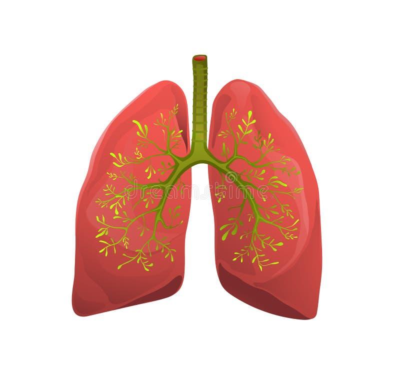 Illustrazione piana di vettore dei polmoni della metafora sana dell'organo illustrazione vettoriale