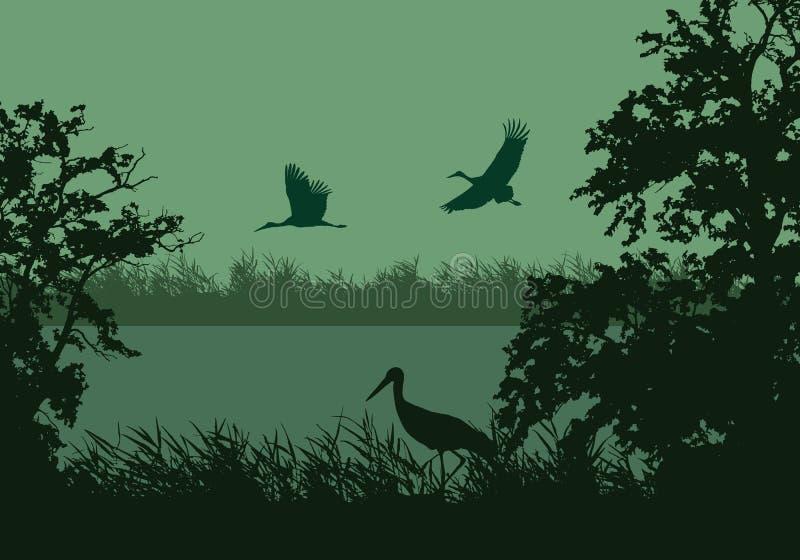 Illustrazione realistica del paesaggio della zona umida con il fiume o lago, superficie dell'acqua ed uccelli Volo della cicogna  royalty illustrazione gratis