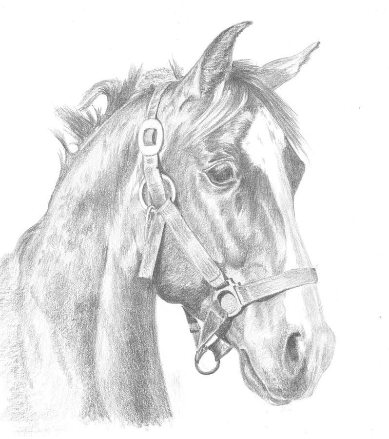Illustrazione rossa del cavallo fotografia stock libera da diritti