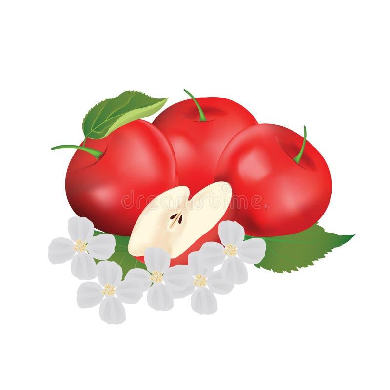 Illustrazione rossa di vettore della mela con la foglia ed il fiore illustrazione di stock