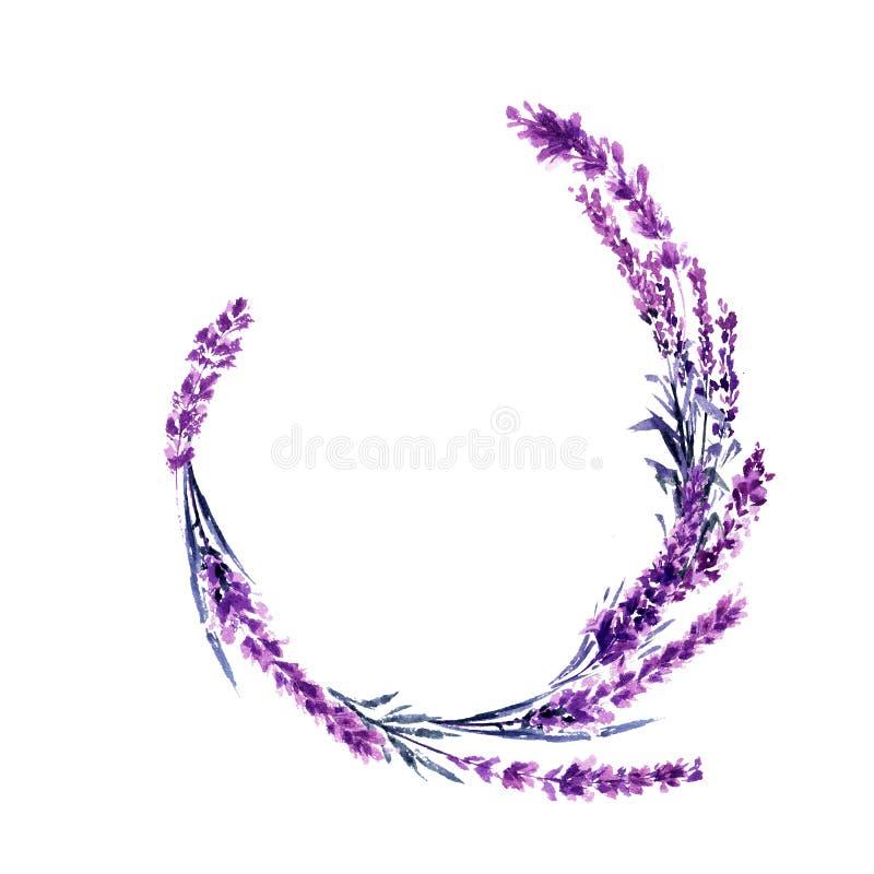 Illustrazione rotonda dell'acquerello del ramo del fiore della lavanda illustrazione vettoriale