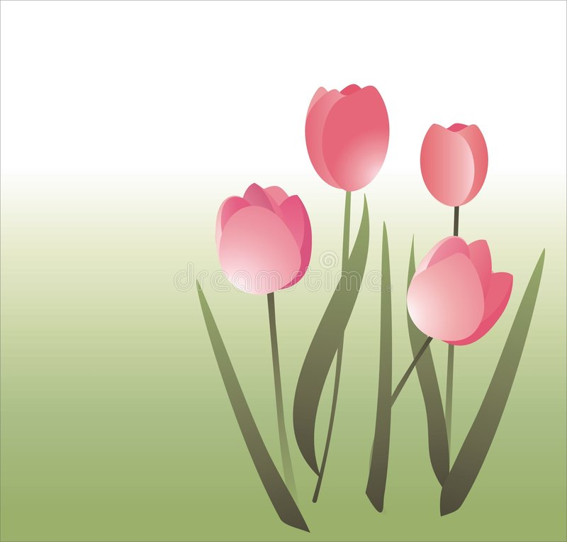 Illustrazione semplice dei tulipani illustrazione di stock