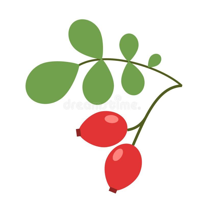 Illustrazione semplice piana delle bacche della rosa canina illustrazione di stock