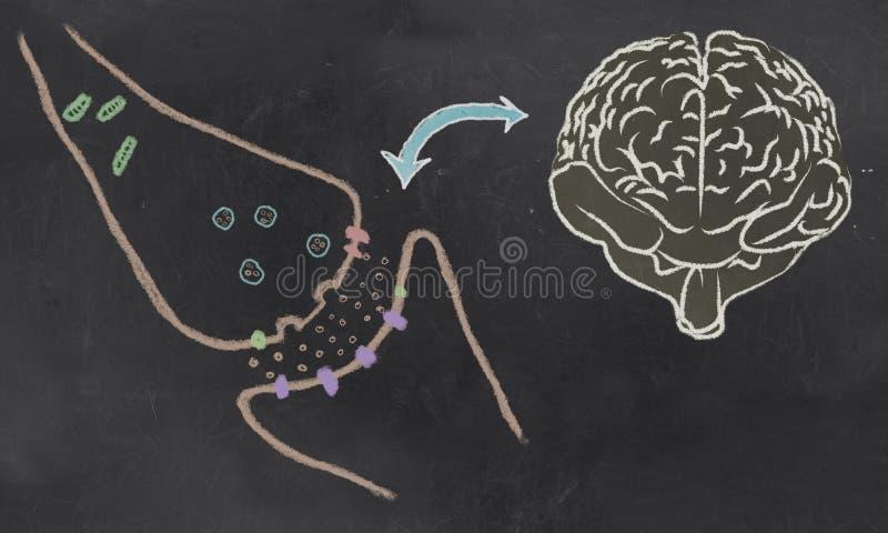 Illustrazione sinaptica dello spacco con i neurotrasmettitori royalty illustrazione gratis